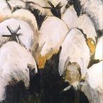 D61 schapen
