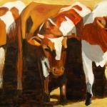 D94 koeien