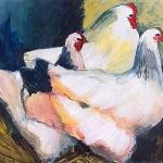 D95 witte kippen