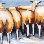 D96 schapen 4