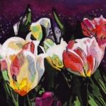 N264 tulpen