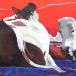 D113 koeien 7