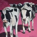 D118 koeien 9