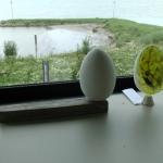 egg-scan