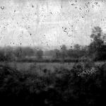 landscape No.6