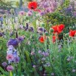 Ton's Spring Garden