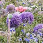 'Gobelin' with Allium