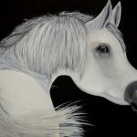 Wit paard Arabier