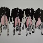 Koeien achterkant