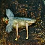 genetic manipulated Fish