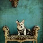 The Deer Hunter @home