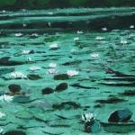 Waterlelies (Landgoed De Haeck)