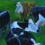 Groep koeien