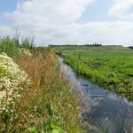 BOBM-polder