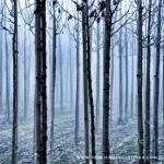 bomen in lijn
