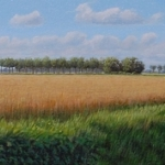 het graanveld
