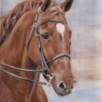 Hannie's paard