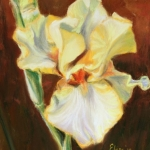 gele iris