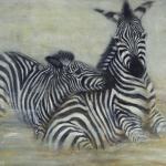 spelende zebra's