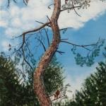 Solitaire Naaldboom