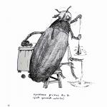 Big spinning beetle