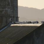 Alcatraz #4