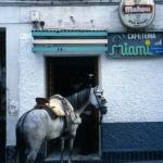 Paard voor café