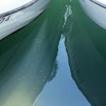 Vissen in haven Kerkira in Korfu Griekenland