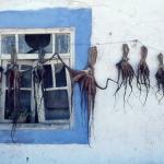 Drogende inktvissen in Viano do Castelo Portugal
