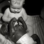 Mijn kleinzoon met gorillababy Bakira