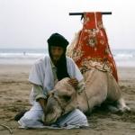 Kamelendrijver met kameel - Agadir Marokko