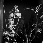 Planten in zonlicht