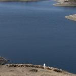 Herder met schaapskudde - Marokko