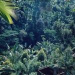 Oerwoud Java