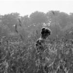 Meisje in korenveld