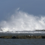 Zeemeeuwen op de kust van Rabat Marokko