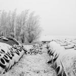White tyres II