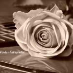 Gitaar met roos in sepia