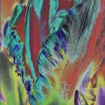 Tulp bewerkt