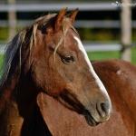 Mooi klein paardje