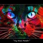 ColourDox