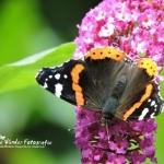 Enjoy this beautyful butterfly (met filmpje)