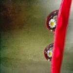 Kamille in druppels