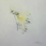 Zwart Geel 03