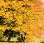 Autumn 2015 | 2