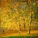Autumn 2015 | 3