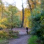 Autumn 2015 | 4