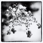 Flower | 2