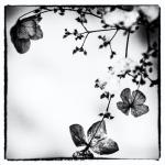 Flower | 3