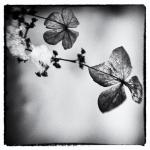 Flower | 4